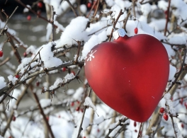 heart-decoration-in-tree.jpg